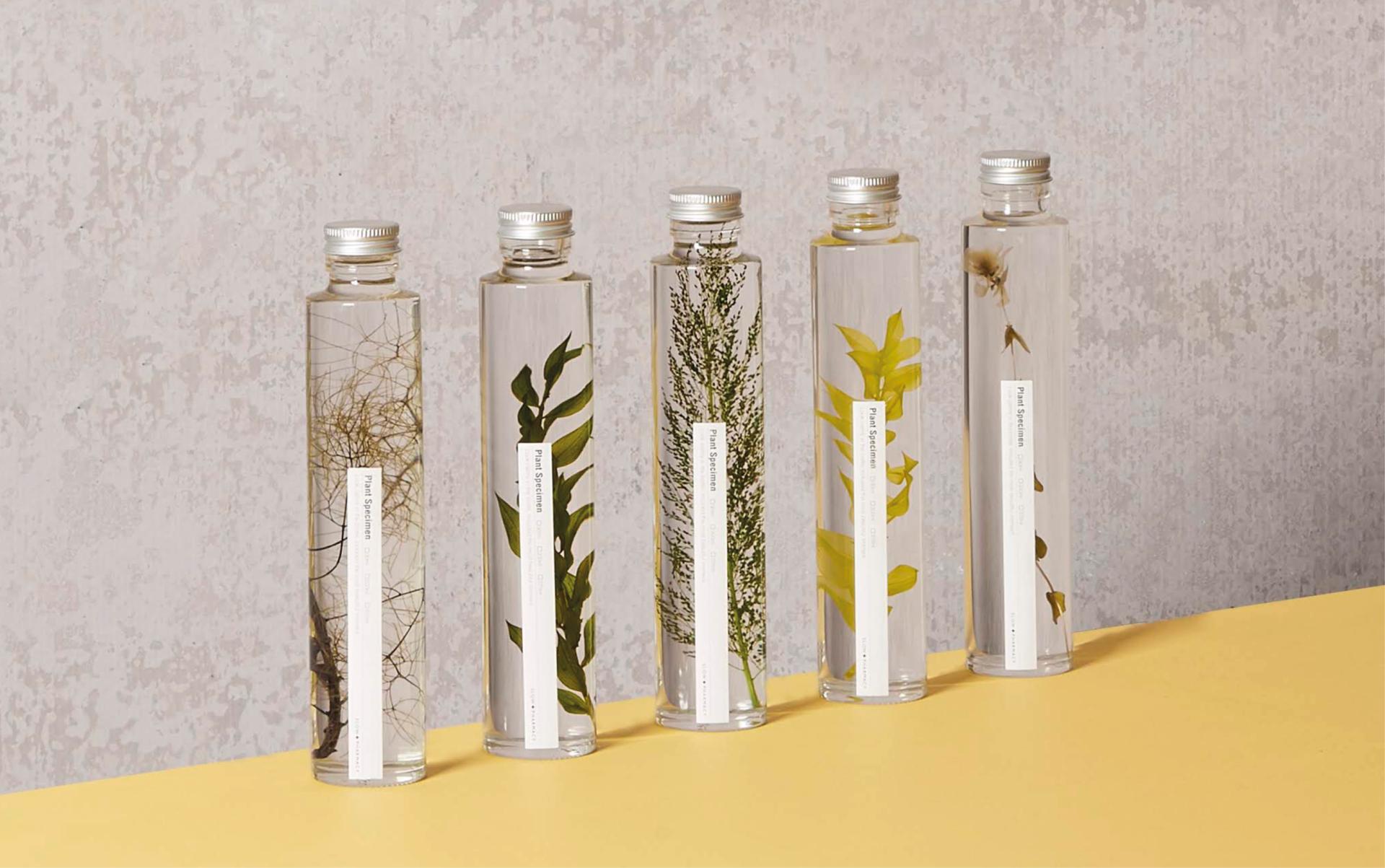 Echantillons Plant Specimen