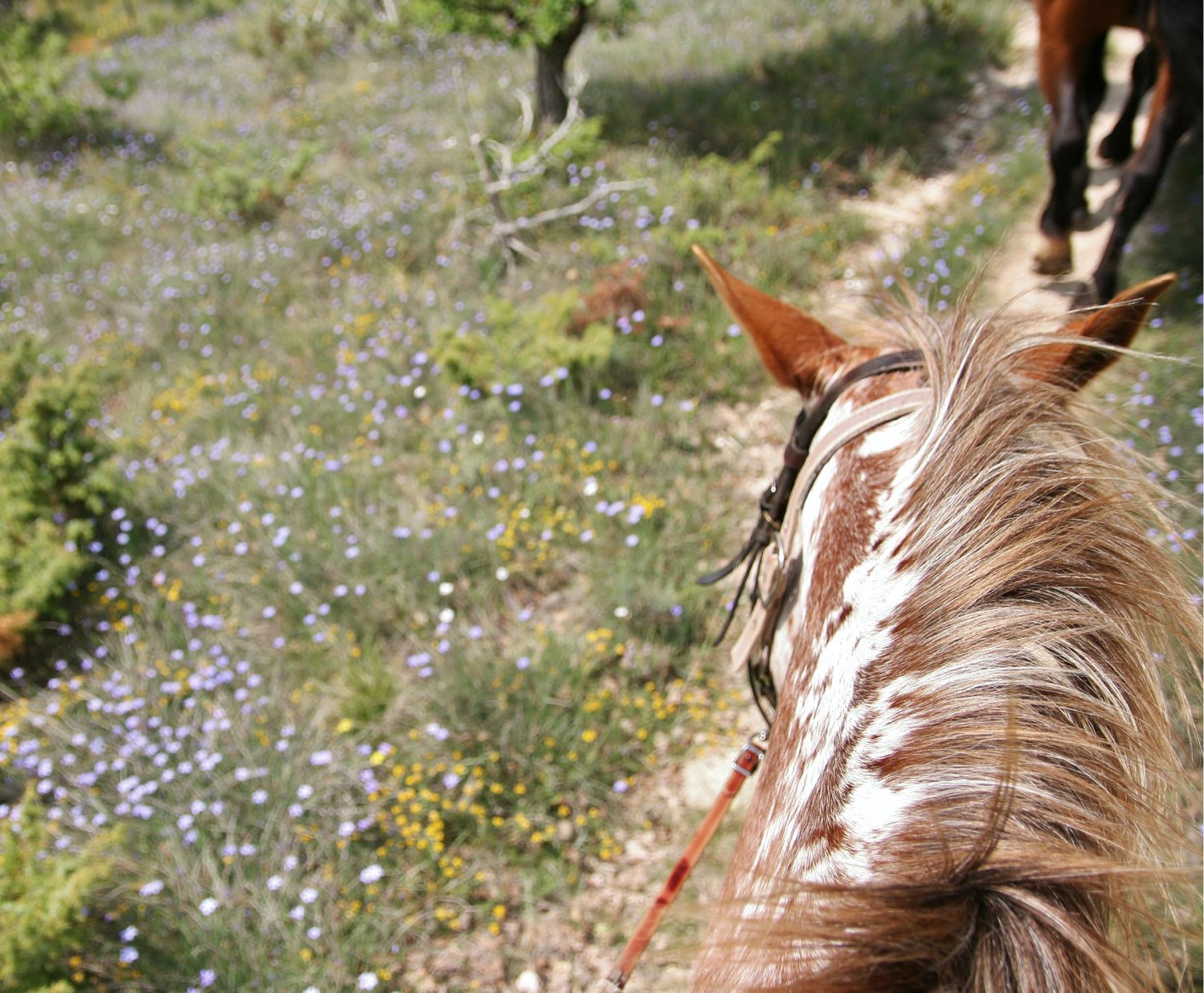Ibiza sauvage à cheval