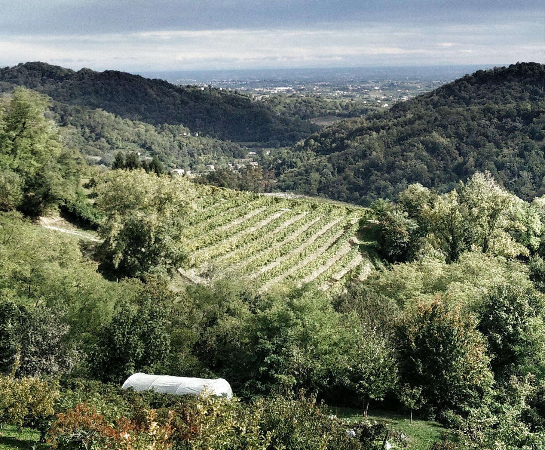 Découvrir les vignes d'Ibiza